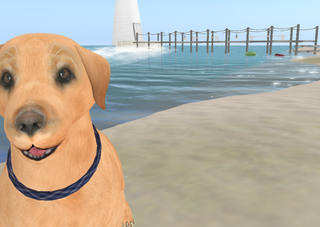 Cute dogs waiting for you!