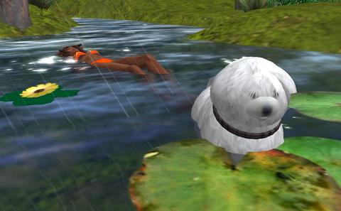 swimming LOLO dog