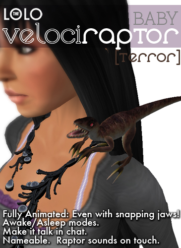 Baby Raptor (Black/Brown Coloration)