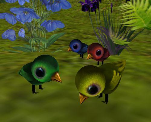 LOLO baby birds